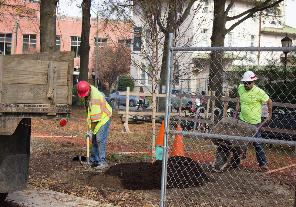 Planting new trees 2015 rsz.jpg