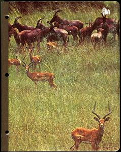M 90 Box 1 Antelope notebook cover rsz2.jpg